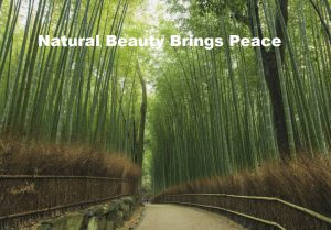 Natural Beauty Brings Peace