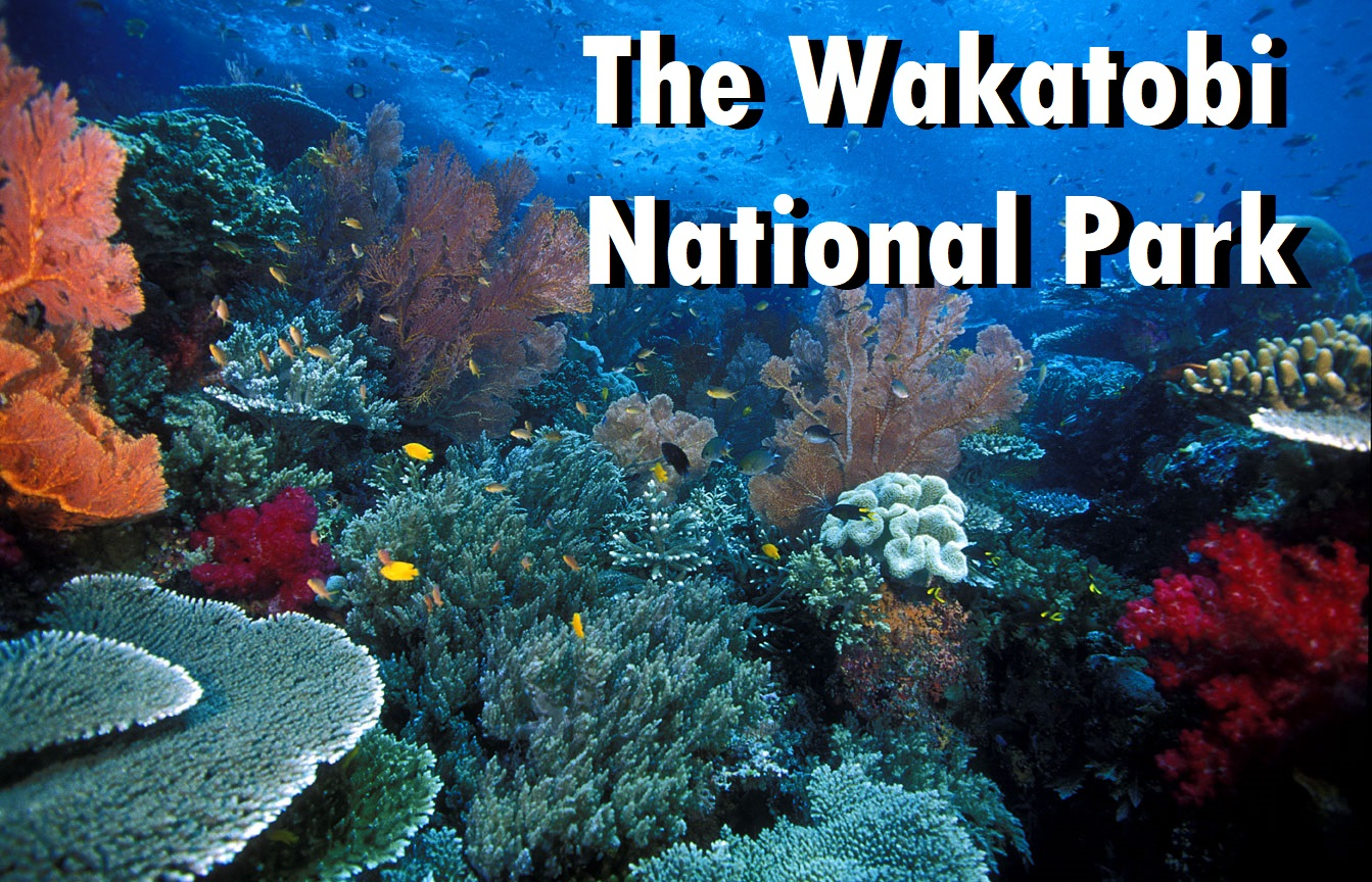 The Wakatobi National Park
