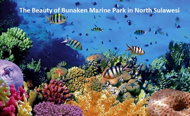 The Beauty of Bunaken Marine Park in North Sulawesi