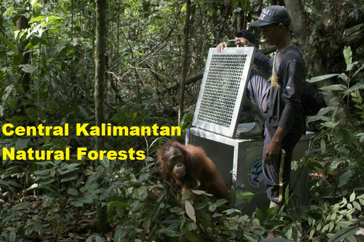 Central Kalimantan Natural Forests